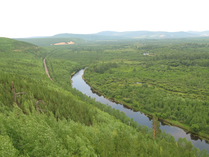HEILONGJIANG FOREST